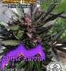 PurpleAurora_Front1-450x480.png