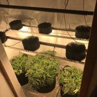 Closet-Gardenholic