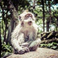 stoned-monkey